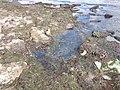 Tyligul Estury stone coast.jpg