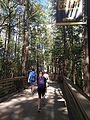 UCF Student Union Walkway (29763406803).jpg