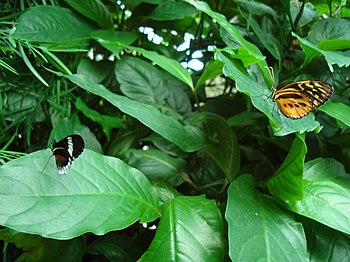 Unidentified butterfly at the Niagara Parks Bu...