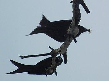 Unknown birds.jpg