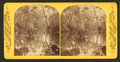 Up the river, from Palmetto Landing, Oklawaha River, Fla, from Robert N. Dennis collection of stereoscopic views.png