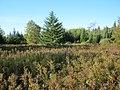 Upland Opening - panoramio.jpg