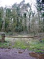 Upper Bolstone Wood - geograph.org.uk - 1778176.jpg