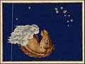 Uranometria 1624-Equuleus.jpg