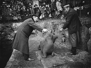 Skansen - Walrus being fed at Skansen, 1908.