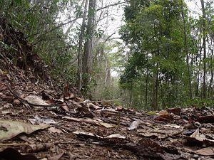 Guatopo National Park - Image: Vegetación rebrota en invierno