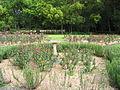 Vergelegen Rose Garden 3.JPG