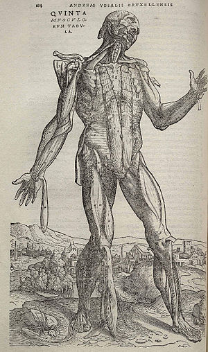 1543 in science - Illustration from De humani corporis fabrica