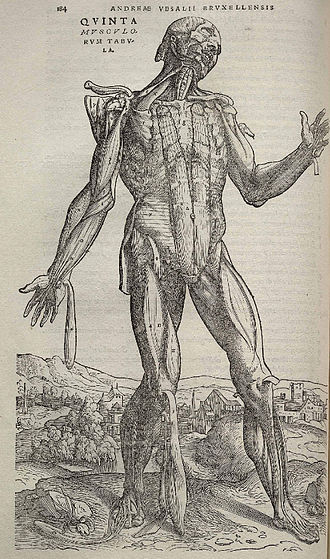 De humani corporis fabrica - The Fabrica is known for its highly detailed illustrations of human dissections, often in allegorical poses.