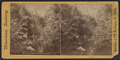 View in the Ramble, Central Park, New York City, from Robert N. Dennis collection of stereoscopic views.png