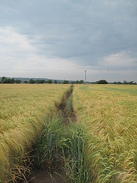 View of the Footpath to Broughton - geograph.org.uk - 1380369.jpg
