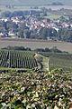 Vigne Pinot Noir (Festigny ) Cl.J.Weber21 (23382075750).jpg