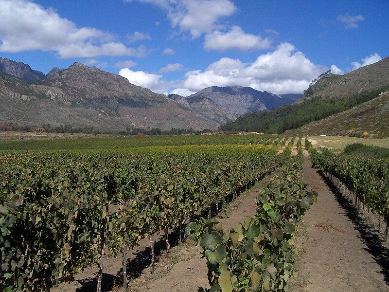 File:Vineyards in Franshhoek.jpg