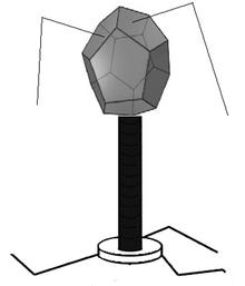 Virus Leteomasis.PNG