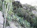 Wadi Bana - وادي بنا - panoramio (1).jpg