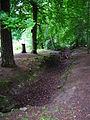 Waldstück Wildpark Alte Fasanerie Klein-Auheim Juni 2012.JPG