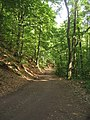 Waldweg - geo.hlipp.de - 2420.jpg
