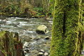 Wallace Falls State Park 05.jpg