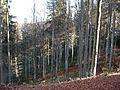 Wandern im November in Todtmoos - panoramio (6).jpg