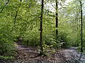 Wanderweg - Gabelung - geo.hlipp.de - 35267.jpg