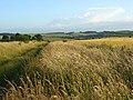 Wayside, Roden Downs - geograph.org.uk - 876608.jpg