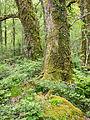 Welsh woodland (7819836090).jpg