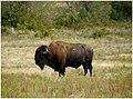 Wichita Mountains Wildlife Refuge, OK - panoramio (5).jpg