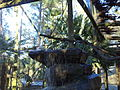Wild Adventures Bird House 010314 5.JPG