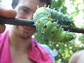 Wild Caterpillar.jpg