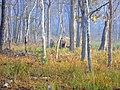 Wildlife's @ Wayanad Wildlife Sanctuary, Muthanga Range - panoramio (3).jpg