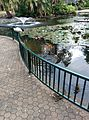 Wildlife of City Botanic Gardens in Brisbane, Australia.jpg