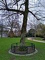 Wilhelminaboom, Wilhelminapark Tilburg.jpg