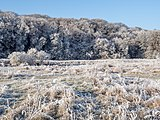Winter-Regnitzaue-Bruderwald-PC310025.jpg