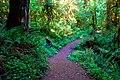Wolf Creek Falls Trail (Douglas County, Oregon scenic images) (douDA0059).jpg