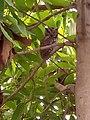Wonderful natural scene 2 Owls sitting on a branch.jpg