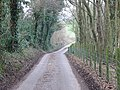 Wooded country lane - geograph.org.uk - 328657.jpg