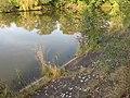 Xaverovský rybník I, břeh V.jpg
