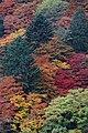 Yoshimine-dera (8256326996).jpg