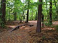 (PL) Polska - Warmia - Ścieżka nad jeziorem Długim w Lesie Miejskim w Olsztynie - Path on the Long Lake in the City Forest in Olsztyn (9.X.2012) - panoramio (15).jpg