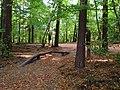 (PL) Polska - Warmia - Ścieżka nad jeziorem Długim w Lesie Miejskim w Olsztynie - Path on the Long Lake in the City Forest in Olsztyn (9.X.2012) - panoramio (15).jpg