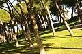® S.D. MADRID PARQUE DEL OESTE - PRADERA DESCENDENTE - panoramio (5).jpg