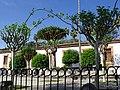 Árboles en la plaza - panoramio.jpg