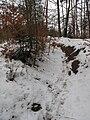 Úvozová cesta pod Gryblou, Hornopožárský les (002).JPG