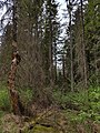Čužu purvs 09.jpg