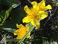 Żółtekwiaty.jpg