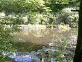 Вид на болото (Чорний ліс).jpg