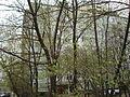 Дом в деревьях 2 - panoramio.jpg