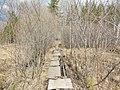 Дорога к Каменным палаткам, конец апреля 2013 - panoramio.jpg