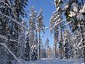 Зимний пейзаж. - panoramio.jpg