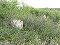 Кам`яний хрест козацького типу (зараз вже розчищений від рослинності).jpg